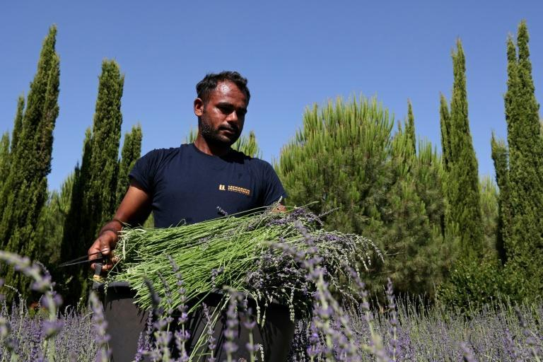 A European project aims to promote tourism in six southern member states with the lure of their aromatic and medicinal plants