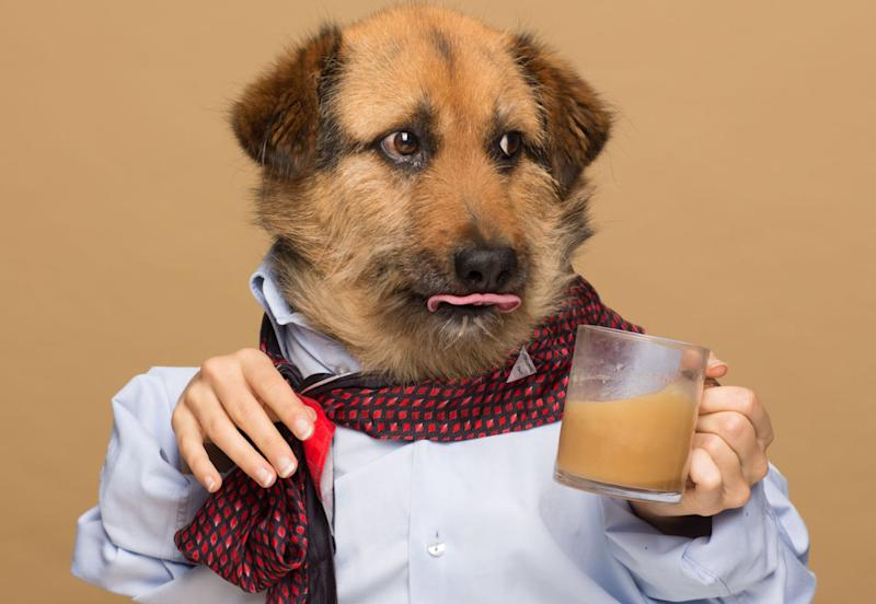 "Crete, one of  Agota Jakutyte's dogs, poses for an ad for ""Rooffee."""