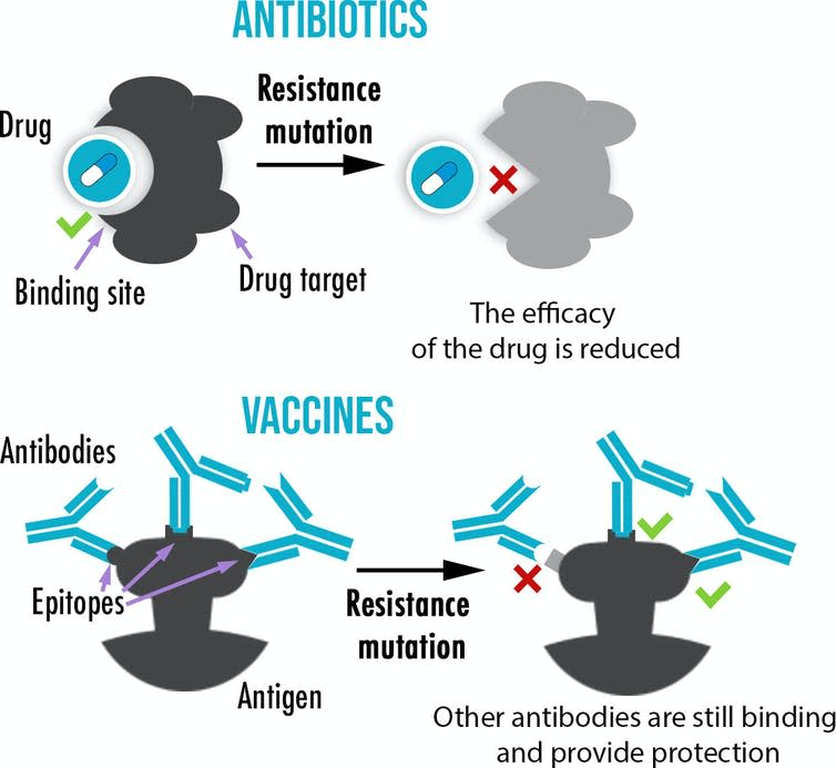 A graph showing that while antibiotics usually have only one target, vaccines create multiple antibodies binding to a different part of an antigen, making the evolution of resistance more difficult