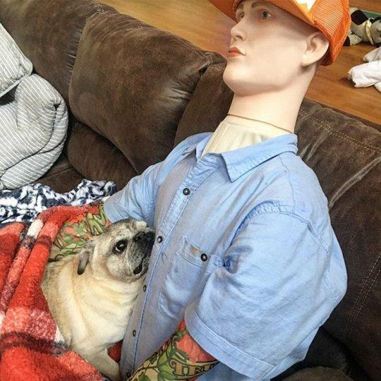 Farc the mannequin enjoys a cuddle with Shorty the 15-year-old pug. (Vintage Animal Rescue)