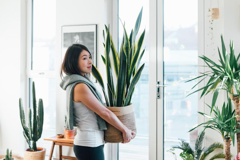 Portrait of smiling woman carrying potted plant at home