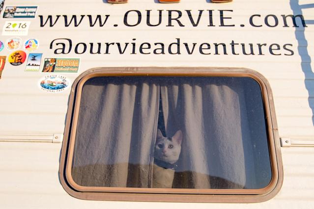 <p>When we go on longer hikes, or places that Vladimir isnt allowed, he stays behind and guards the RV for us. (Photo: Our Vie / Caters News) </p>