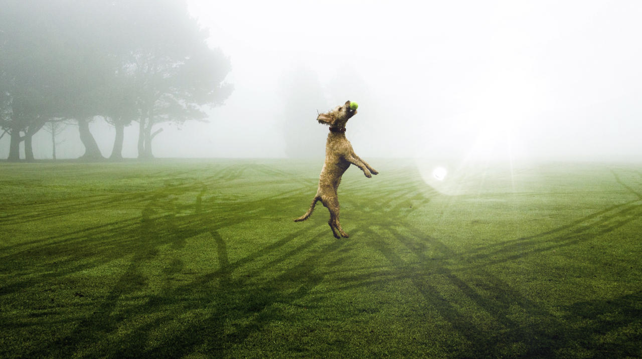 <p>RSPCA Young Photographer of the Year winners. A dog leaping to catch a tennis ball in a park by 17-year-old Ollie Ross in Derbyshire. </p>