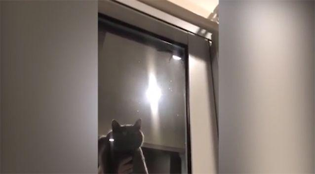 The family attempted to get the cat to scare the spider away.