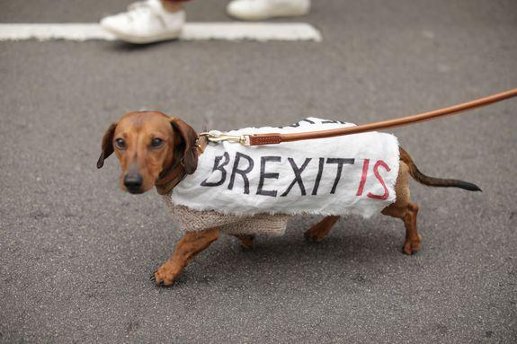 Even dogs joined the march.