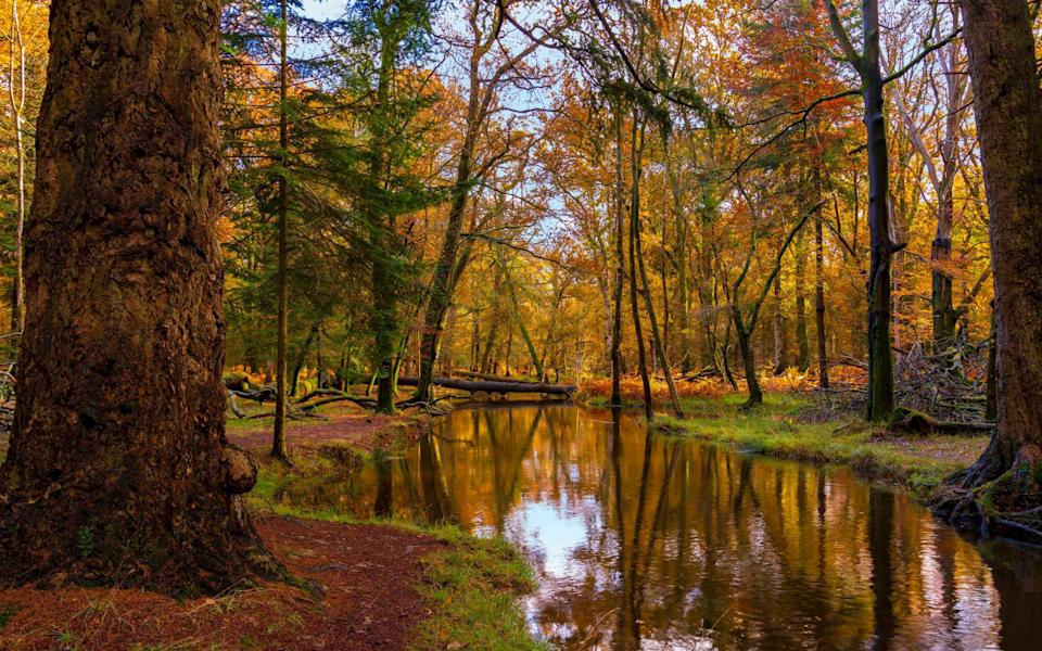 Golden leaves in the New Forest - Getty