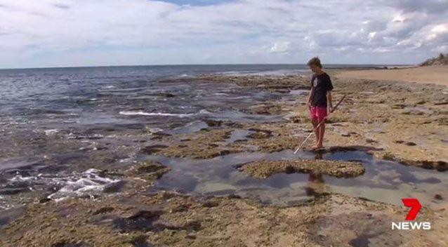 The teen believes the shark was chasing a fish he had just speared. Source: 7 News