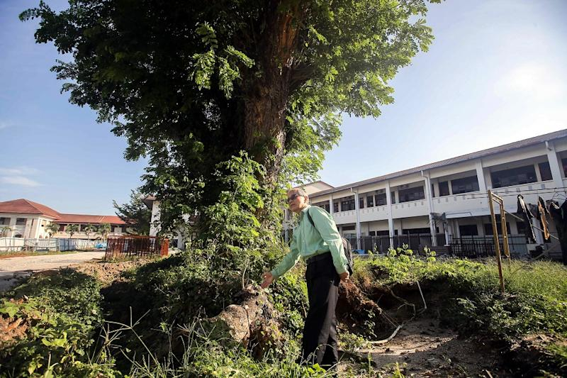 Dr Ting Cheh Sing walks next to the iconic 100-year-old rain tree in the Methodist Girls' School in Ipoh February 1, 2019. — Pictures by Farhan Najib