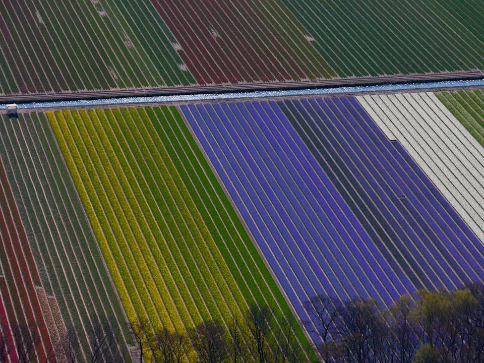 farmland in the netherlands