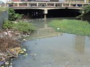 Estero de Paco MRF Pool before the clean up.