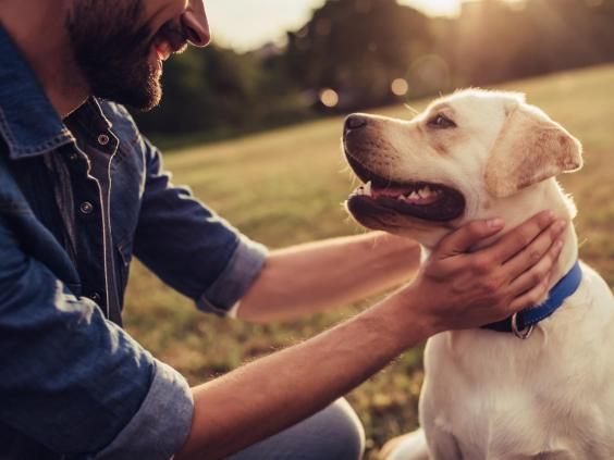 Take man's best friend on holiday (iStock)