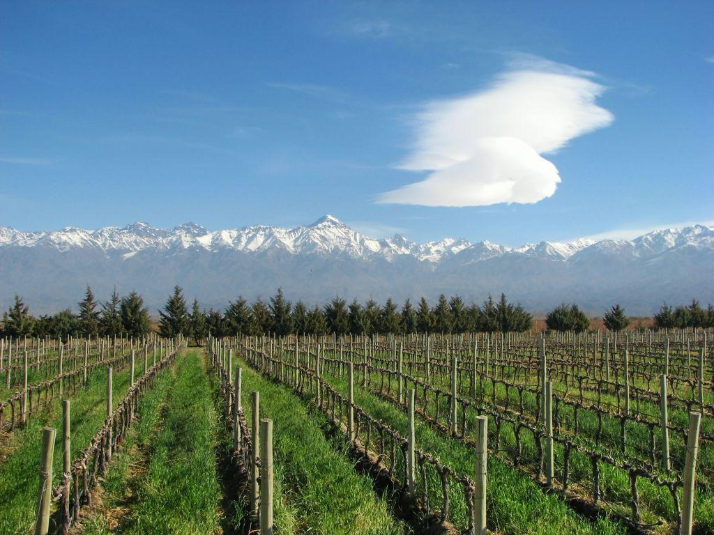 <b>MENDOZA, ARGENTINA</b> <br>A vineyard in Mendoza at the foothills of the Andes. The region is Argentina's wine country and is richly planted with grapes. Mendoza is reputed to produce the world's finest Malbec, wine made from a dark purple variety of grape.