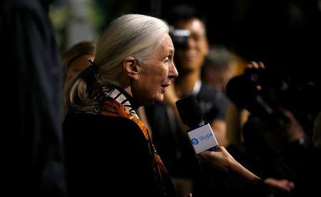 """FILE PHOTO: British primatologist Goodall is interviewed at the premiere for the documentary """"Jane"""" in Los Angeles"""