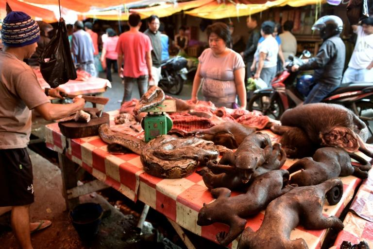 A vendor offers various exotic animals, including pythons and crested black macaques, to his customers at Tomohon market in northern Sulawesi