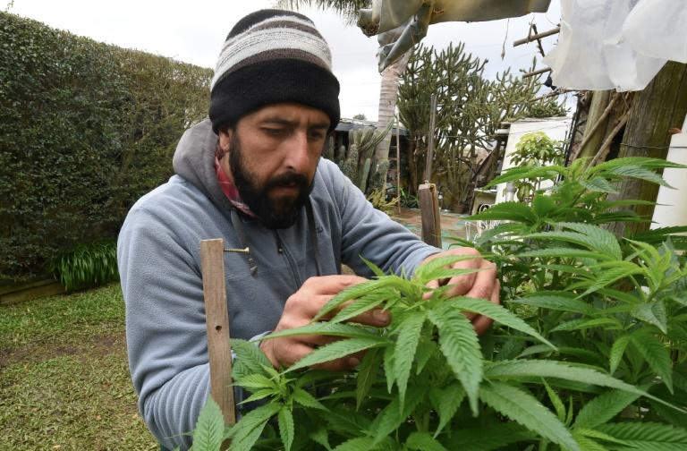 Grower Federico Corbo says authorities should do more to ensure pharmacies offer better quality cannabis