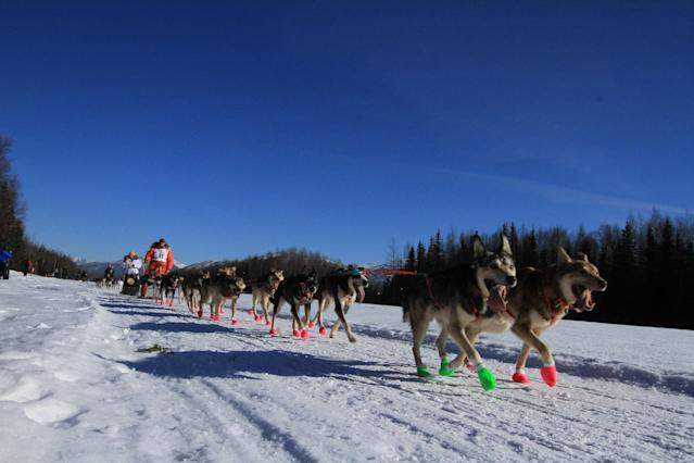 Jake Berkowitz of Big Lake, Alaska, drives his dog team along Campbell Air Strip near the end of the ceremonial start of the 2014 Iditarod Trail Sled Dog Race on Saturday, March 1, 2014, in Anchorage, Alaska. (AP Photo/Dan Joling)