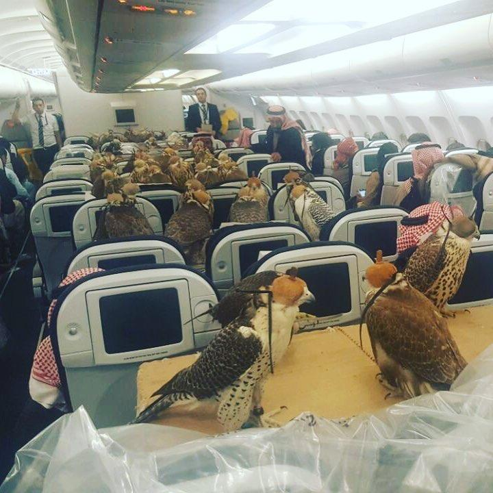 Quite a few falcons on this flight then [Reddit/Lensoo]