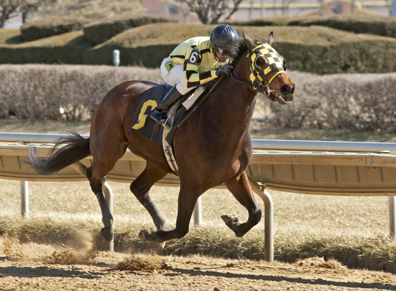 Gelding whose mother was rescued wins horse race