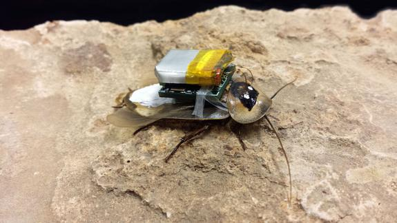 Cyborg Roaches Could Be Used to Find Disaster Survivors