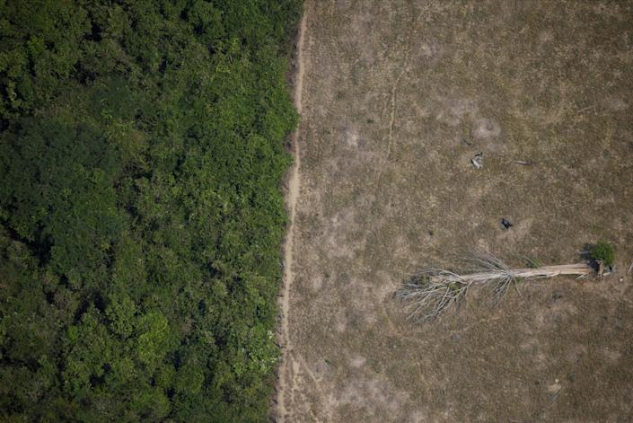 A fallen tree lies in an area of the Amazon jungle that was cleared by loggers and farmers near Porto Velho, Rondonia State, Brazil, August 14, 2020.