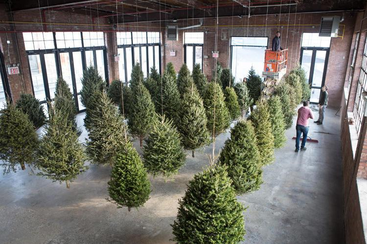 "<p>Artist <a href=""http://www.michaelneff.com/"">Michael Neff</a> turns discarded Christmas trees into treasure in his dreamy art installation, called <i><a href=""http://knockdown.center/event/suspended-forest/"">Suspended Forest</a>.</i> Neff hangs the Christmas trees by twine to look like floating woods. (Photo: <a href=""http://www.michaelneff.com/"">Michael Neff</a>)<br /></p>"