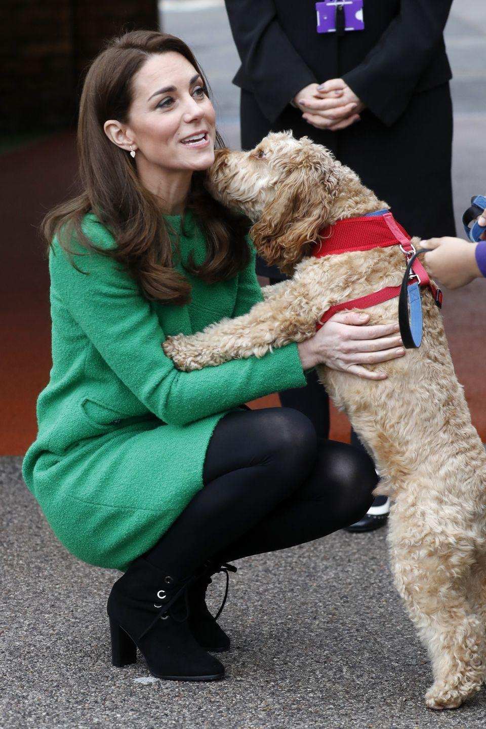 <p>Kate Middleton meets Herbie, Lavender Primary School's friendly cockapoo, during a visit to the school.</p>