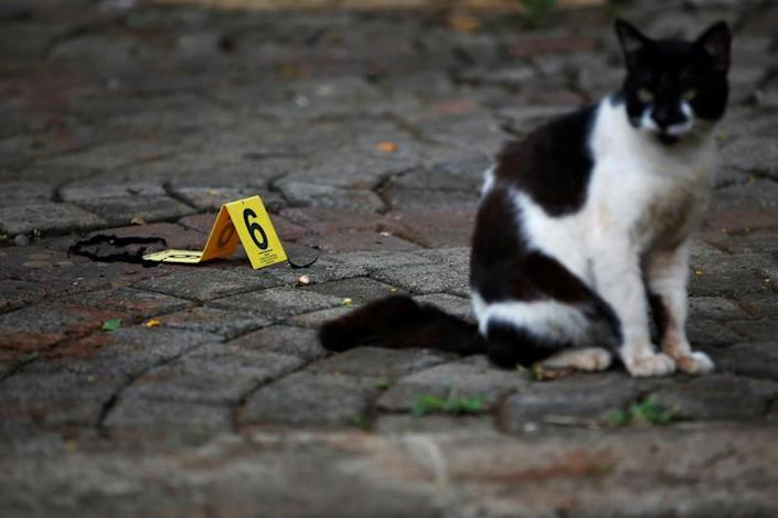 A cat is seen next to the evidence of a blast at National Monument (Monas) complex in Jakarta
