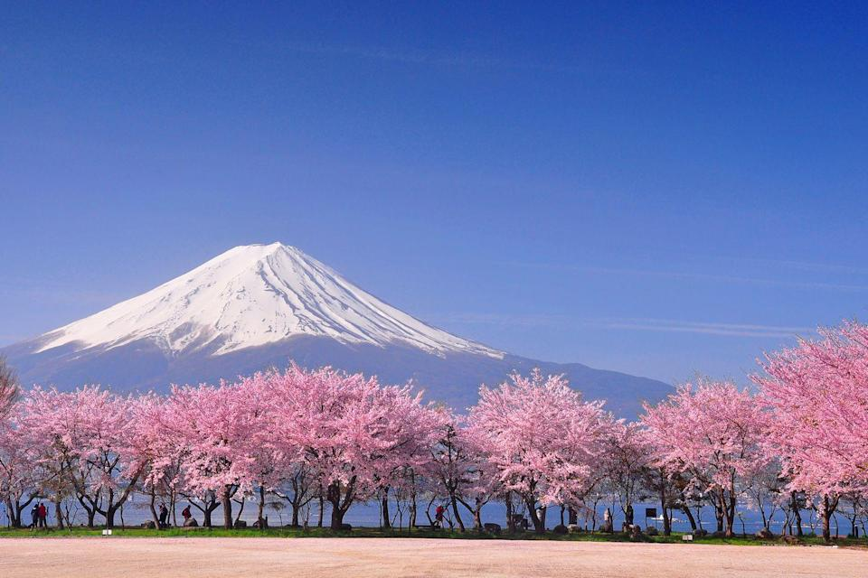 "<p>We can't think of a better event trip than exploring the gardens, bright cities and majestic mountains of Japan. If you're looking to reduce your carbon footprint by only taking one big trip in 2022 make it a discovery of Japan. </p><p>Here, you can explore the Japanese Alps, visit Kyoto's Bamboo Forest and try your hand at making golf-leaf chopsticks and soba noodles, not forgetting soaking in a hot spring in Takayama with our fantastic <a href=""https://www.countrylivingholidays.com/tours/japan-tokyo-cherry-blossom-kyoto-fuji-osaka-tour"" rel=""nofollow noopener"" target=""_blank"" data-ylk=""slk:2022 tour"" class=""link rapid-noclick-resp"">2022 tour</a>.</p><p><a class=""link rapid-noclick-resp"" href=""https://www.countrylivingholidays.com/search?locations%5Bsearch%5D=Japan&locations%5Bcountry%5D=JP"" rel=""nofollow noopener"" target=""_blank"" data-ylk=""slk:BOOK NOW"">BOOK NOW</a></p>"