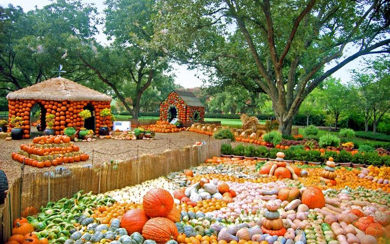 outdoor pumpkin patch fillwed with stacked multi-colored pumpkins and red shed in background