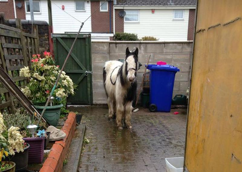 Young horse dumped in Nan's back yard