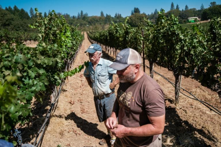 Randy Dunn (L) and his son Mike check on their vines at their Central California vineyard (AFP/Nick Otto)
