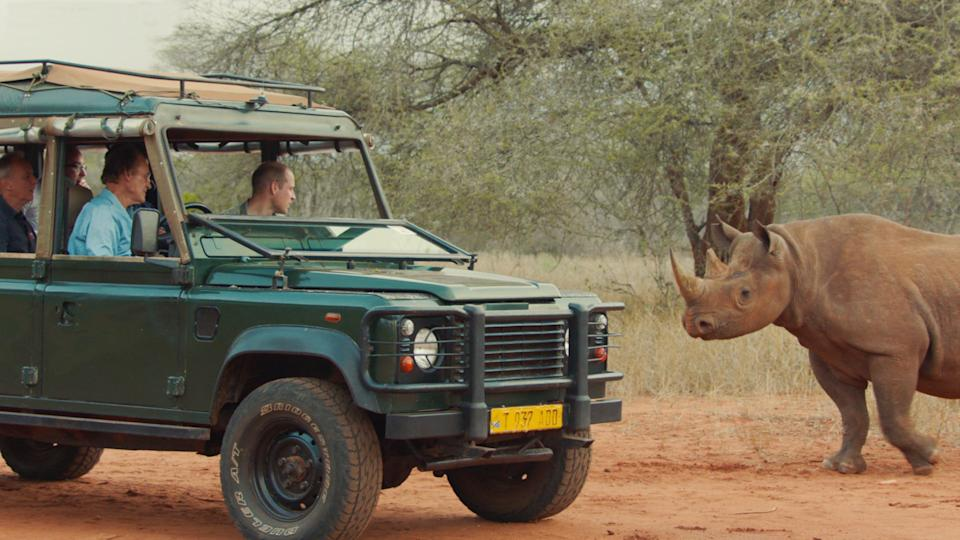 Use your horn: face to face with a rhino in NamibiaITV