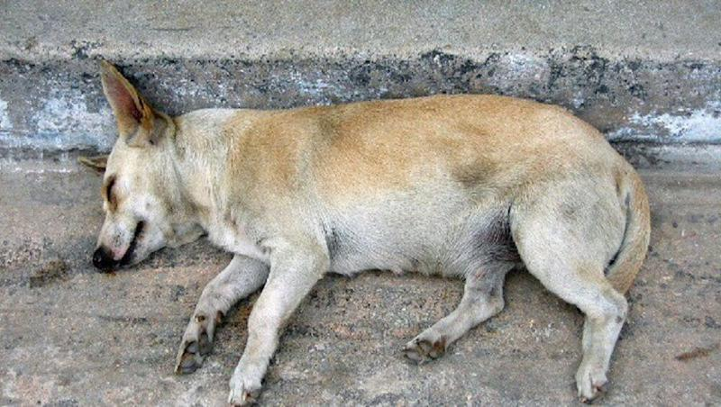 Hyderabad Security Guard Mercilessly Attacks Dog Leaving It With Critical Head Injuries
