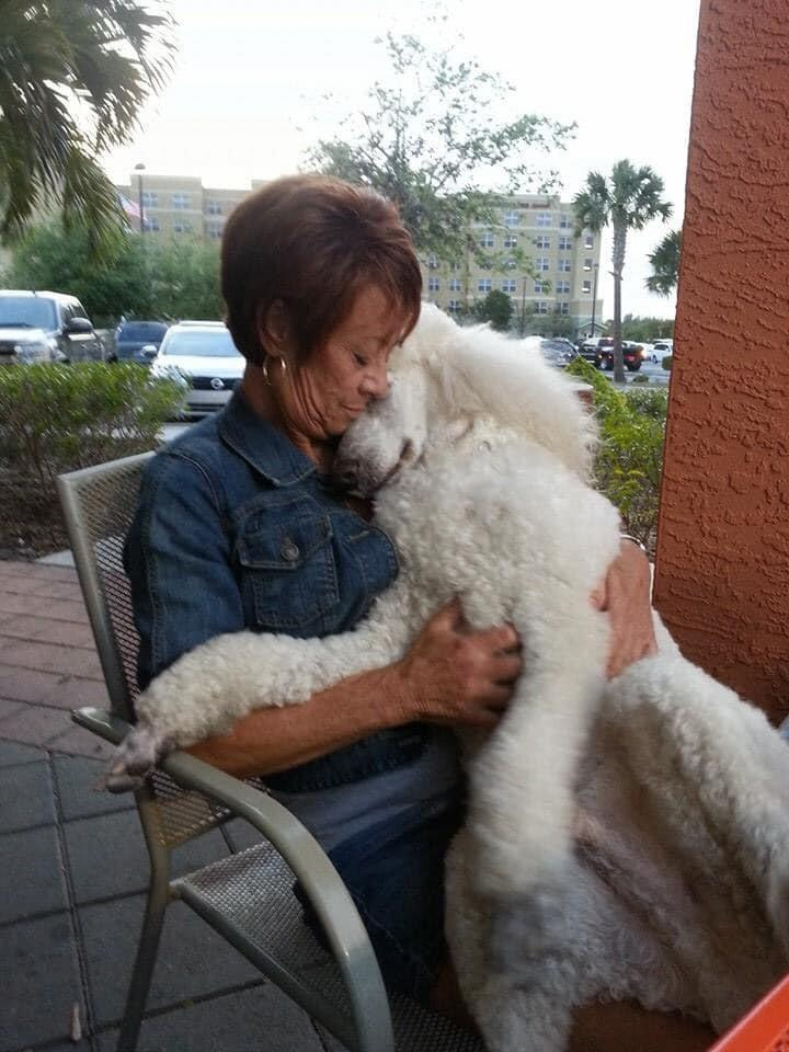 Fla. Mom and Her Poodle Were Killed Crossing Street in Hit-and-Run — as Police Search for Driver