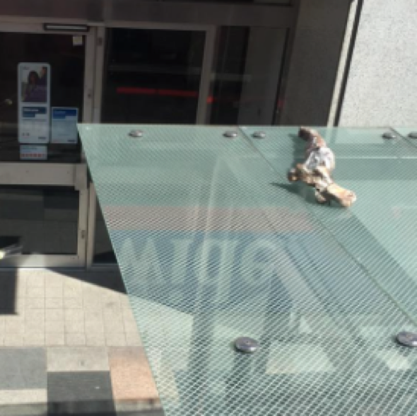 Severed animal leg left rotting on top of London bus stop