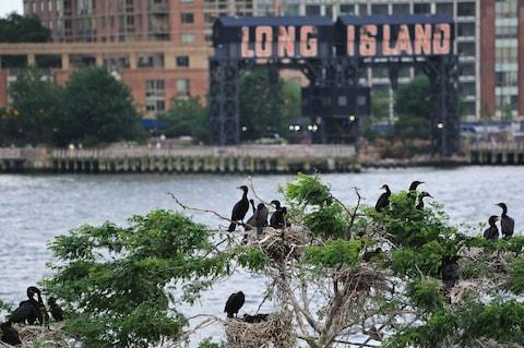 U Thant Island's only residents - Credit: ALAMY