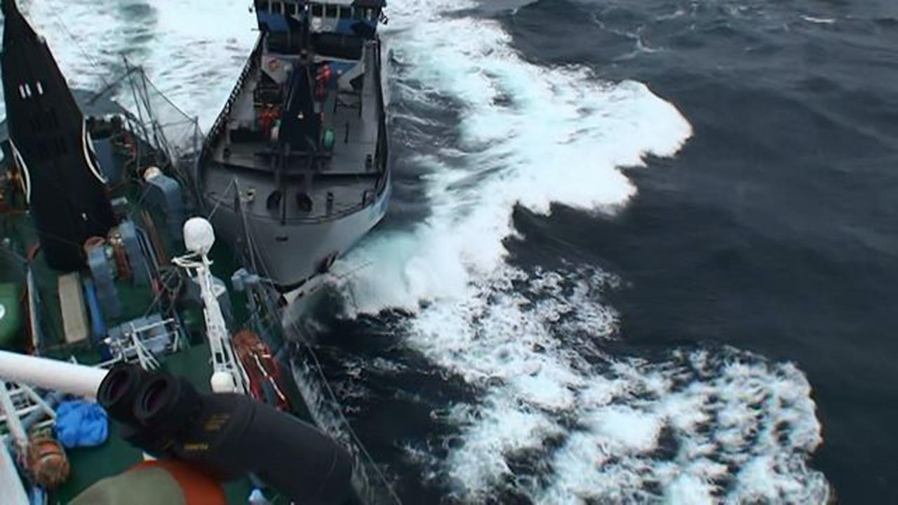 "Sea Shepherd vessel ""The Bob Barker"" is pictured in contact with the port side stern of Japanese whaling ship Yushin Maru in the Southern Ocean in this February 2, 2014 handout photo by the Institute of Cetacean Research. REUTERS/Institute of Cetacean Research/Handout via Reuters (ANTARCTICA - Tags: ENVIRONMENT CIVIL UNREST) 