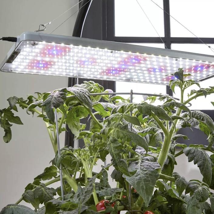 <p>Suitable for both ceiling and tabletop use, the 45-watt <span>Root Farm All-Purpose LED Grow Light</span> ($75) is designed to grow plants from seed to harvest all year long. </p>