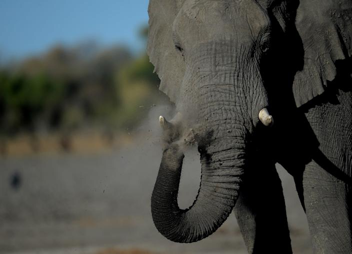 <p>File image: The female elephant was reportedly standing with her calf when she hit the zoo worker </p> (AFP via Getty Images)