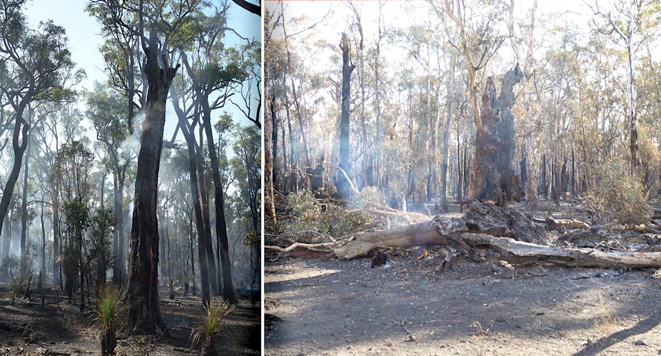 Two images of smouldering habitat trees.