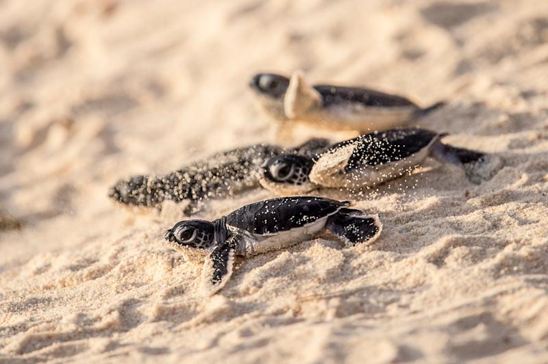 Nesting turtles on Praslin beach - Credit: EUAN CHERRY