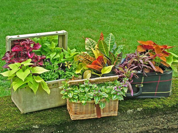 """<div class=""""caption-credit"""">Photo by: Nancy Ondra</div><div class=""""caption-title"""">Case by Case</div>Give an old suitcase new life as an out-of-the-ordinary container. Old (or new) chests, makeup cases or wicker cases are other good options. Add the plants, prop the lid partway open and let the stems spill out over the edge."""