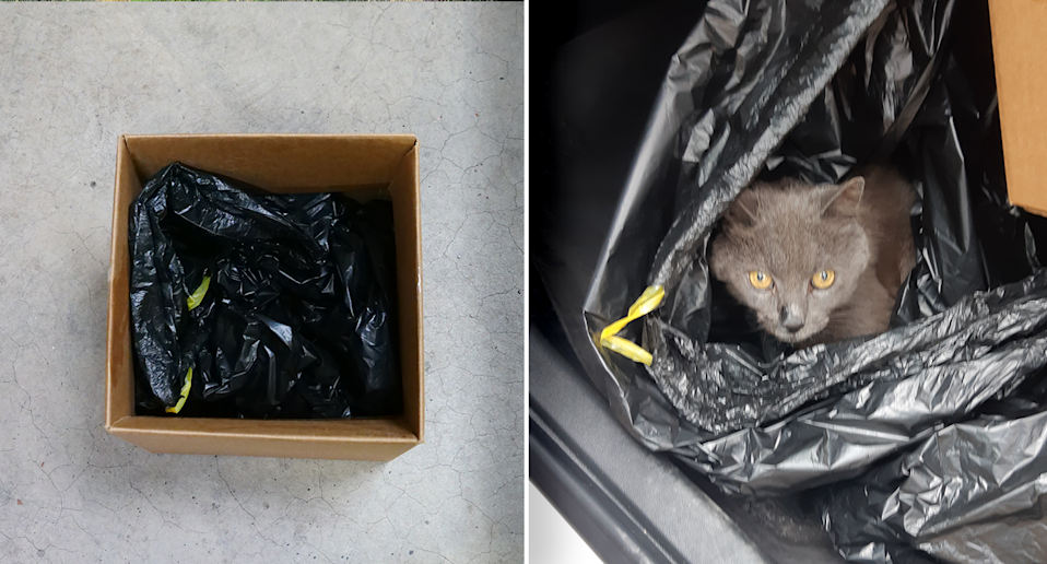 Pictured left is a bag inside a box on the ground. Right is Stitch the cat peering out of the bag.