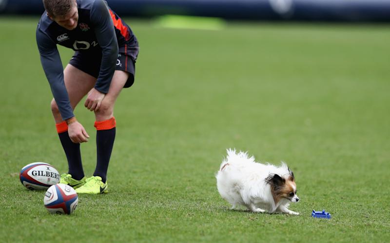 Owen Farrell attempts to catch head coach's dog, Annie during an earlier training session at Pennyhill Park, on February 22, 2017  - Credit: David Rogers/Getty Images