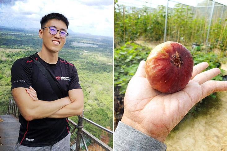 There's nothing like the taste of a fresh fig, says Figara11 co-founder Cheah Zhao Yan
