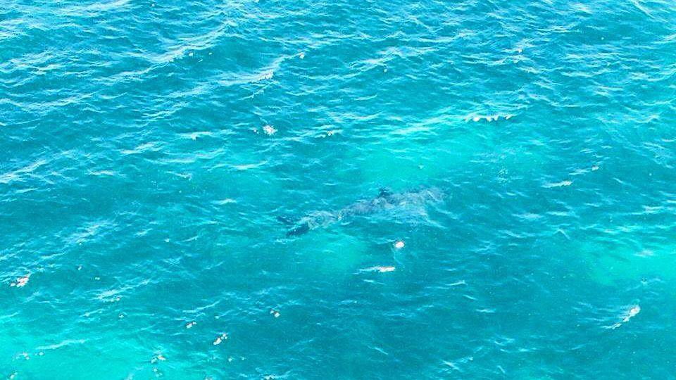 The Shark Alerts South Australia Facebook page posted this image after the sighting on Sunday. Photo: Facebook