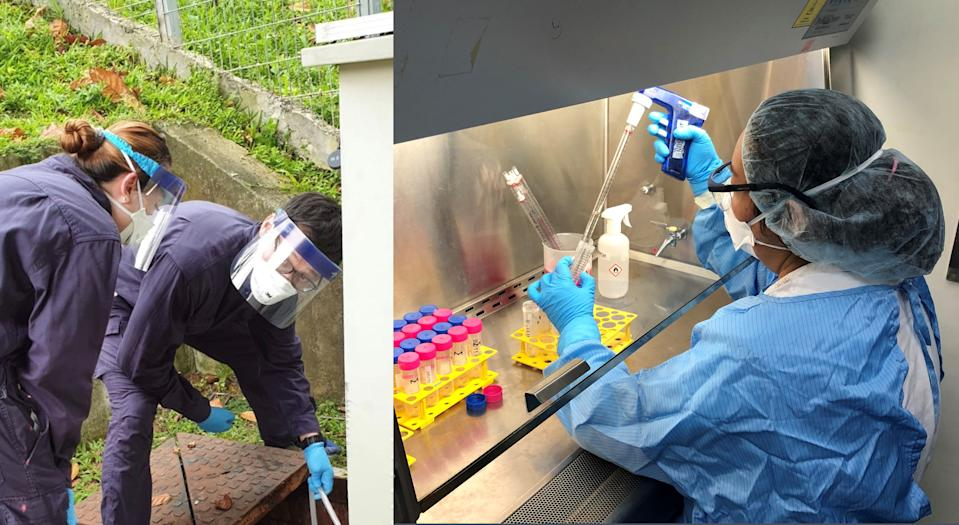 The NEA has initiated a pilot surveillance programme to screen wastewater samples for SARS-CoV-2, the virus causing COVID-19. (PHOTOS: NEA)