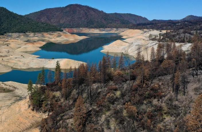 OROVILLE, CALIFORNIA - APRIL 27: Trees burned by the recent Bear Fire line the steep banks of Lake Oroville where water levels are low on April 27, 2021 in Oroville, California. Four years after then California Gov. Jerry Brown signed an executive order to lift the California's drought emergency, the state has re-entered a drought emergency with water levels dropping in the state's reservoirs. Water levels at Lake Oroville have dropped to 42 percent of its 3,537,577 acre-foot capacity. (Photo by Justin Sullivan/Getty Images)