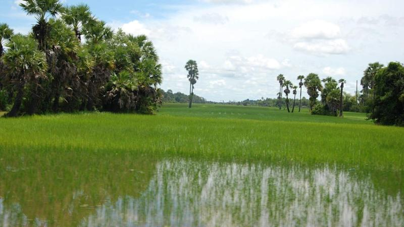 Rice paddies give out twice as much in greenhouse gases than previously thought
