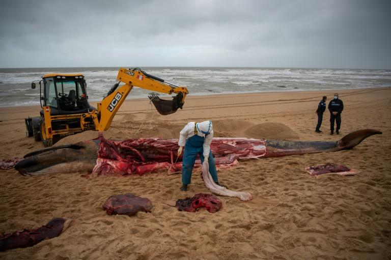 Whale Stranding in France